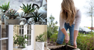 11 DIY Planters can enhance your garden beauty | DIY planter ideas
