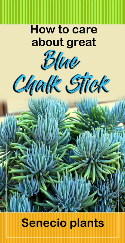 Chalk Stick