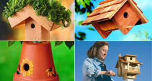 10 DIY Bird house a Charming Project | Nature Bring