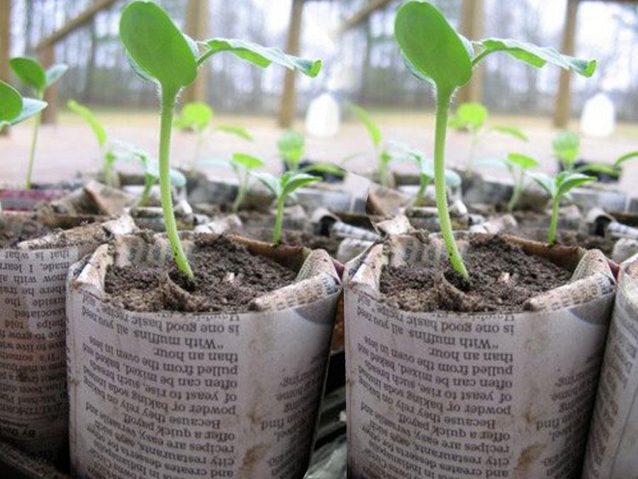 DIY Seed Starter