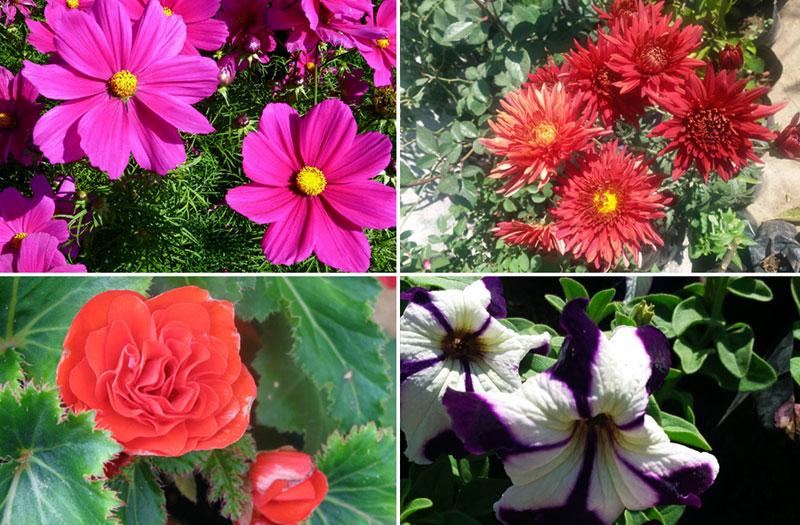 10 Splendid plants for Flower BedGardening | ground cover