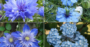 Best Blue flowers | A cool theme for your summer garden | Cool effect