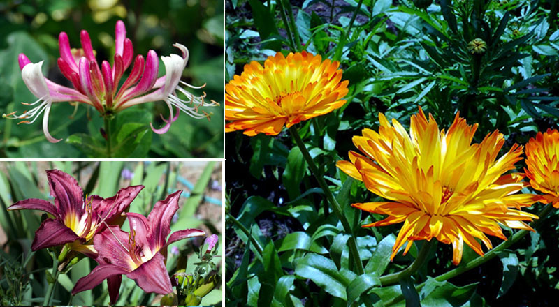 9 Best Edible Flowers you can eat | How to Grow Edible Flowers
