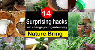 Gardening hacks | clever gardening hacks change the way of gardening