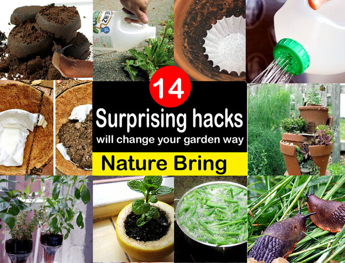 14 Gardening hacks are useful for your smart gardening | Garden hacks