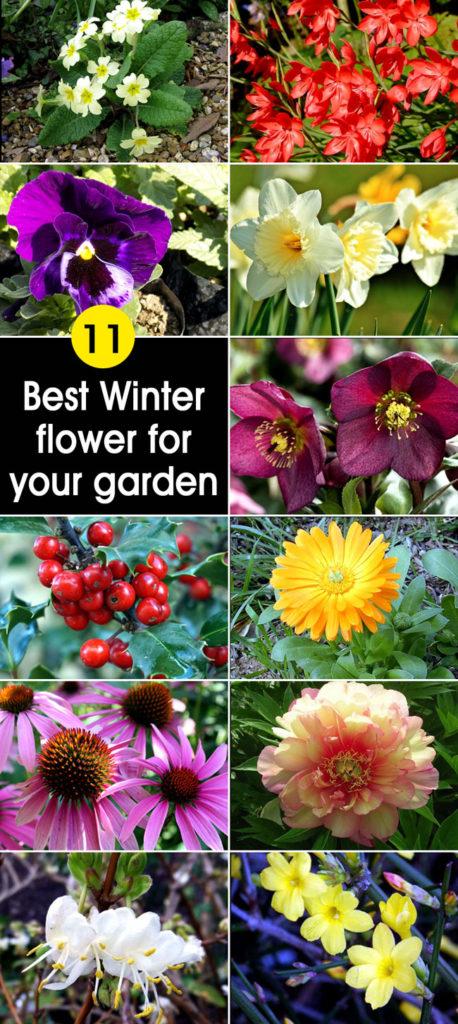 Winter flowers | winter plants
