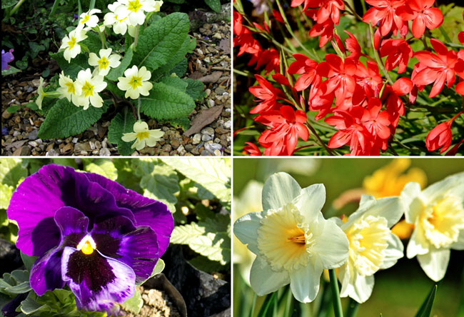 11 Best Winter flower for your garden | Winter garden