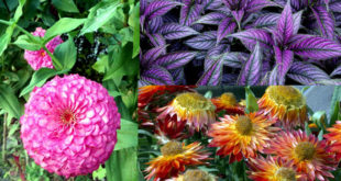 Container garden | The Best Filler Plants for Container Gardens