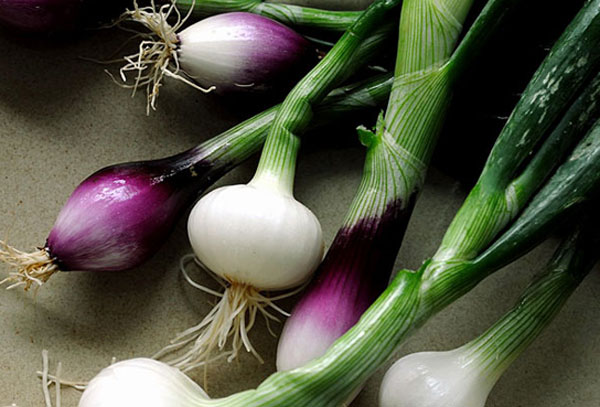 How to grow Spring Onions | Growing Spring Onions in a pots