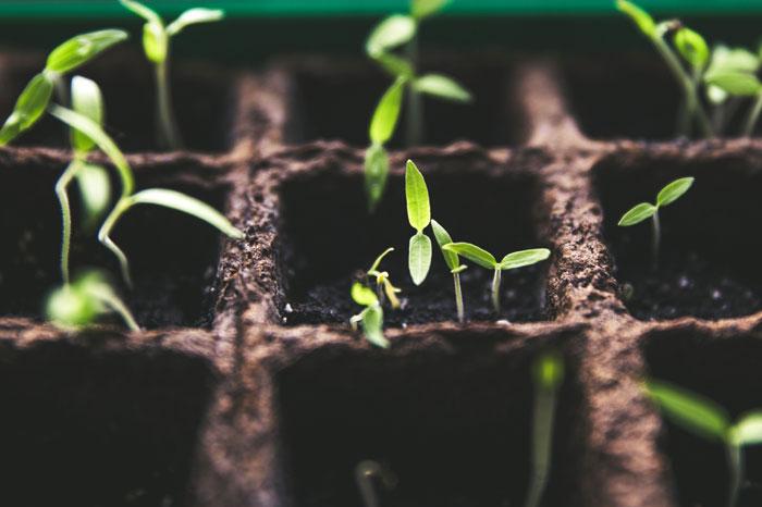 Frugal Gardening tips | money-saving gardening