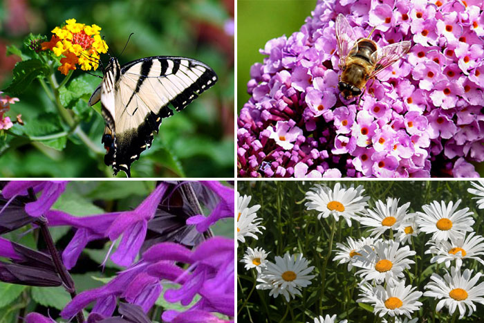 Best flowers for Bees and Butterfly garden | Pollinator Garden