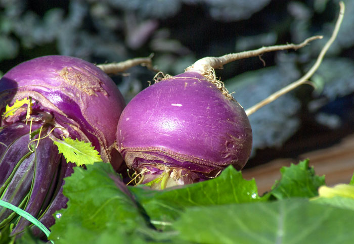 How to grow Turnip | Growing Turnips in containers | Turnips care