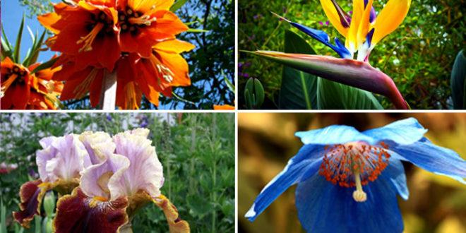 Unique Flowers