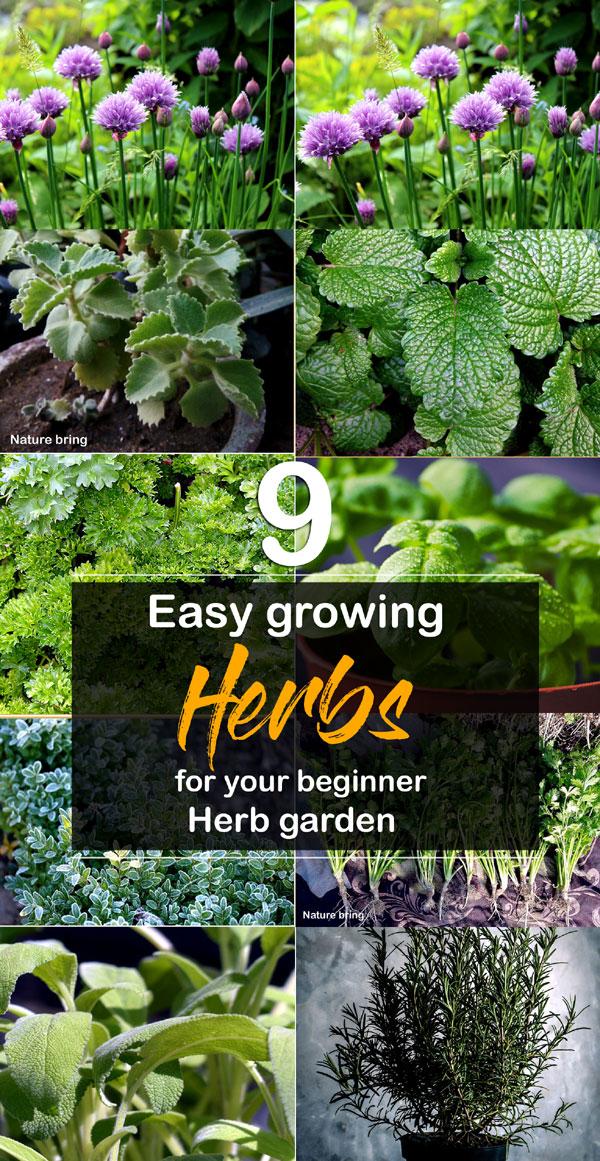 Herb | kitchen garden | Easy Growing Herbs | Herb garden