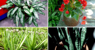 9 Houseplants you can totally neglect | Low maintenance Houseplant