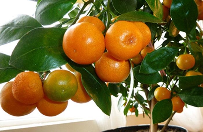 Top fruit plants | Fruit trees
