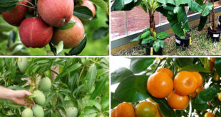 Top 10 Fruits to grow in containers | Top fruit plants | Fruit trees