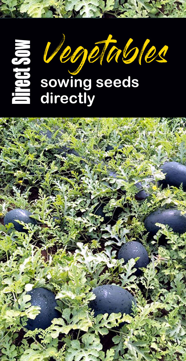 Direct Sow Vegetables | sowing seeds directly