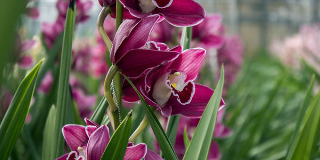 How to grow orchid   Growing orchids   orchid flower