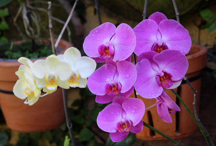 How to grow orchid | Growing orchids | orchid flower