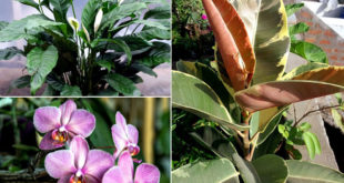 9 Best Feng Shui Plants for your good fortune | Houseplant