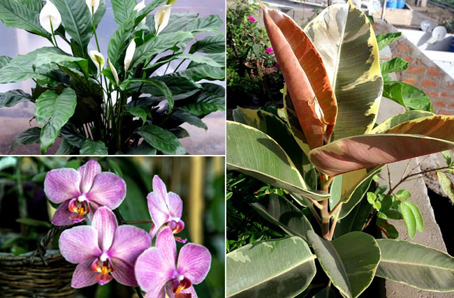 Feng Shui Plants | Houseplant