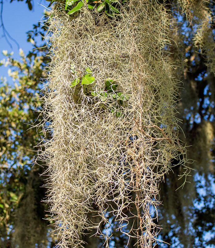 types of air plants | air plants care | Tillandsia