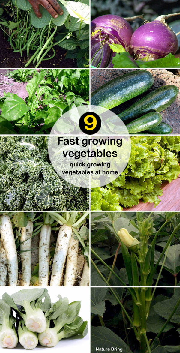 fast growing vegetables | quick growing vegetables at home