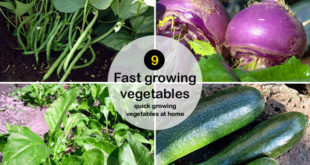 9 fast growing vegetables | quick growing vegetables at home