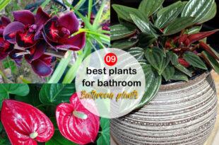 best plants for bathroom   Bathroom plants   shower plants