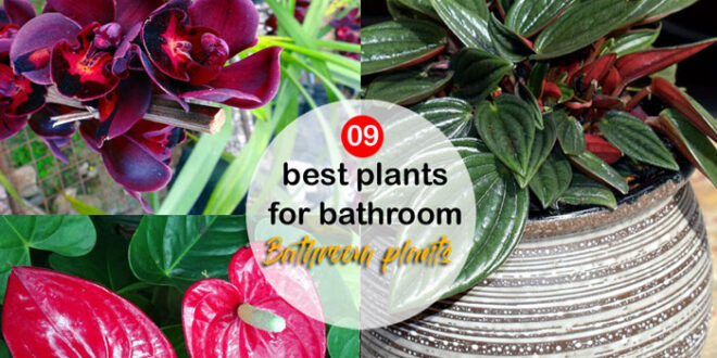 best plants for bathroom | Bathroom plants | shower plants