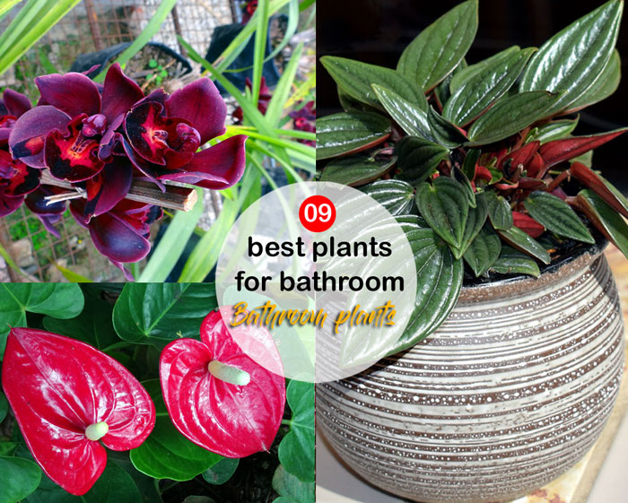 09 best plants for bathroom | Bathroom plants | shower plants