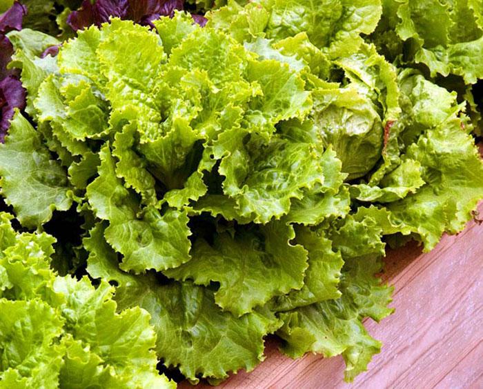 vegetable in container garden