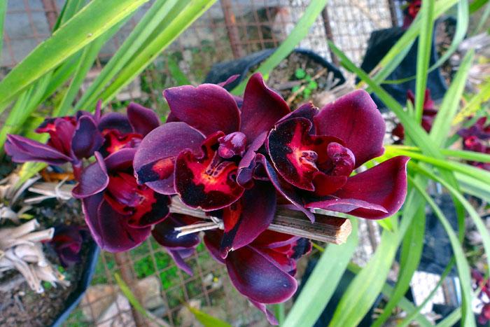 best plants for bathroom | Bathroom plants | shower plants | indoor plants