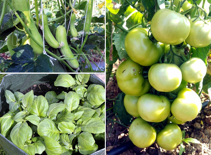 10 Best vegetables to grow in pots | vegetable in container garden