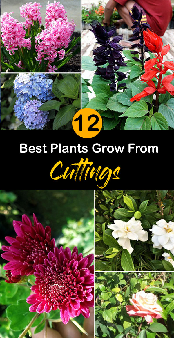 Best Plants Grow From Cuttings | Plants propagation | stem Cuttings