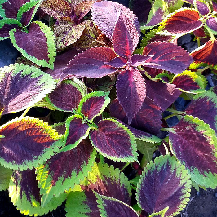 Best foliage plants