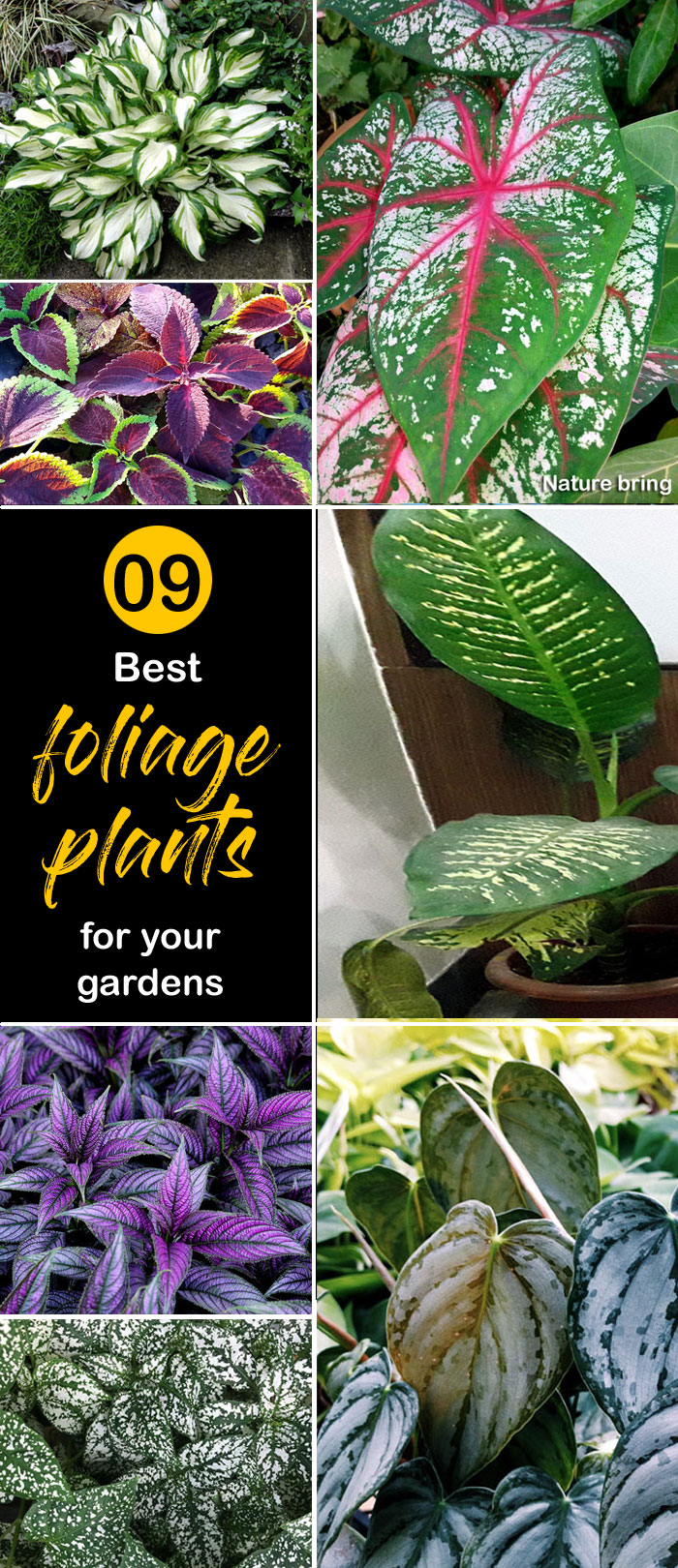 Best foliage plants| leaf plants for containers | foliage plants for containers