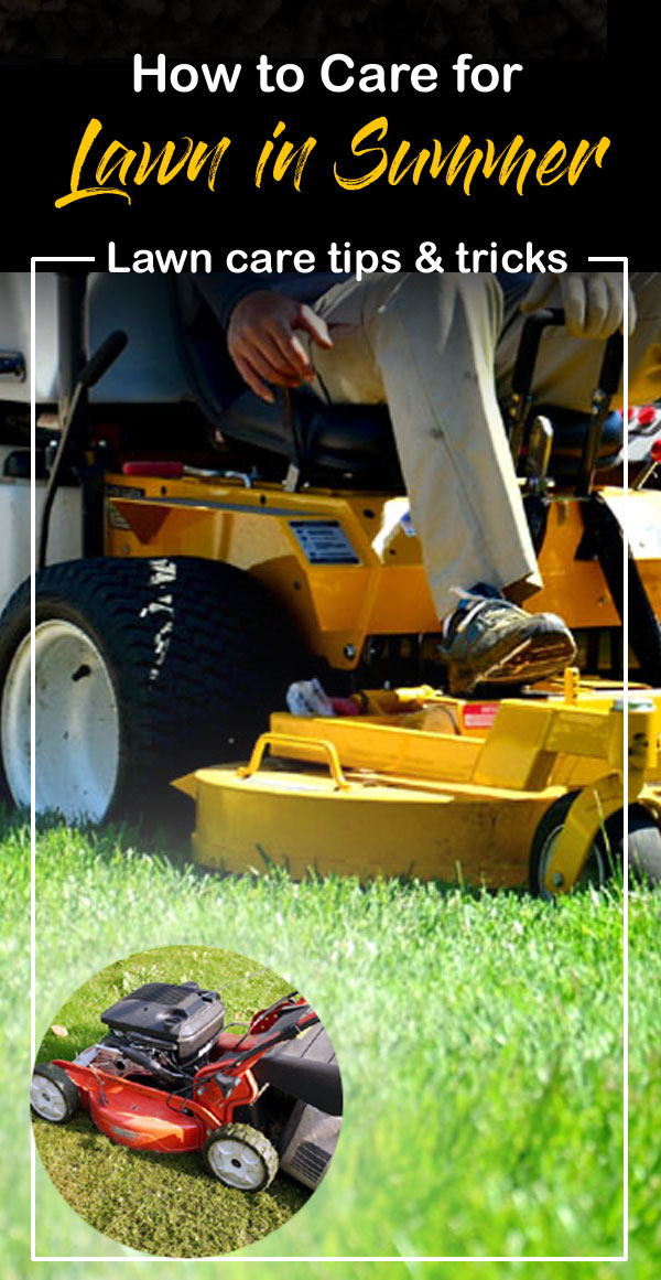 Lawn care tips | lawn care in summer