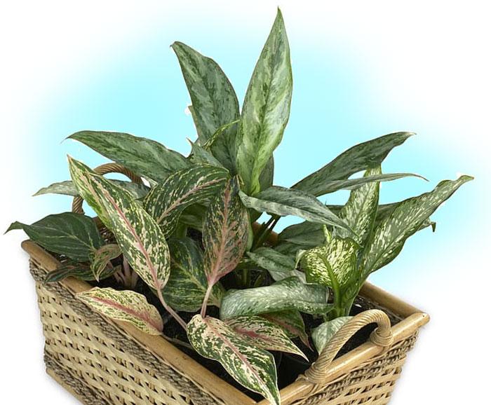 ndoor plants