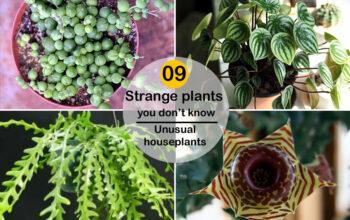 Strange plants
