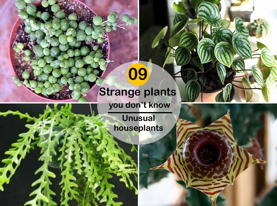 09 Strange plants you don't know | Unusual houseplants