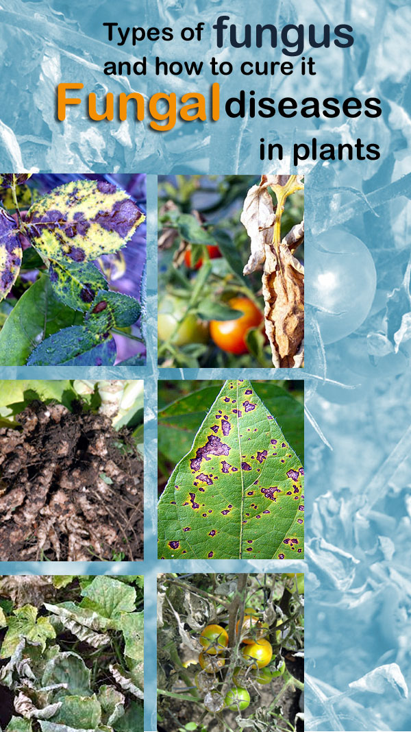 Types of fungus | Fungal diseases in plants