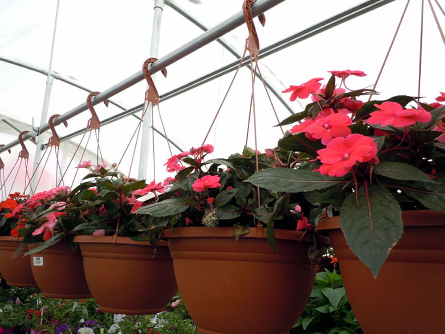How to plant hanging baskets | plants for Hanging baskets