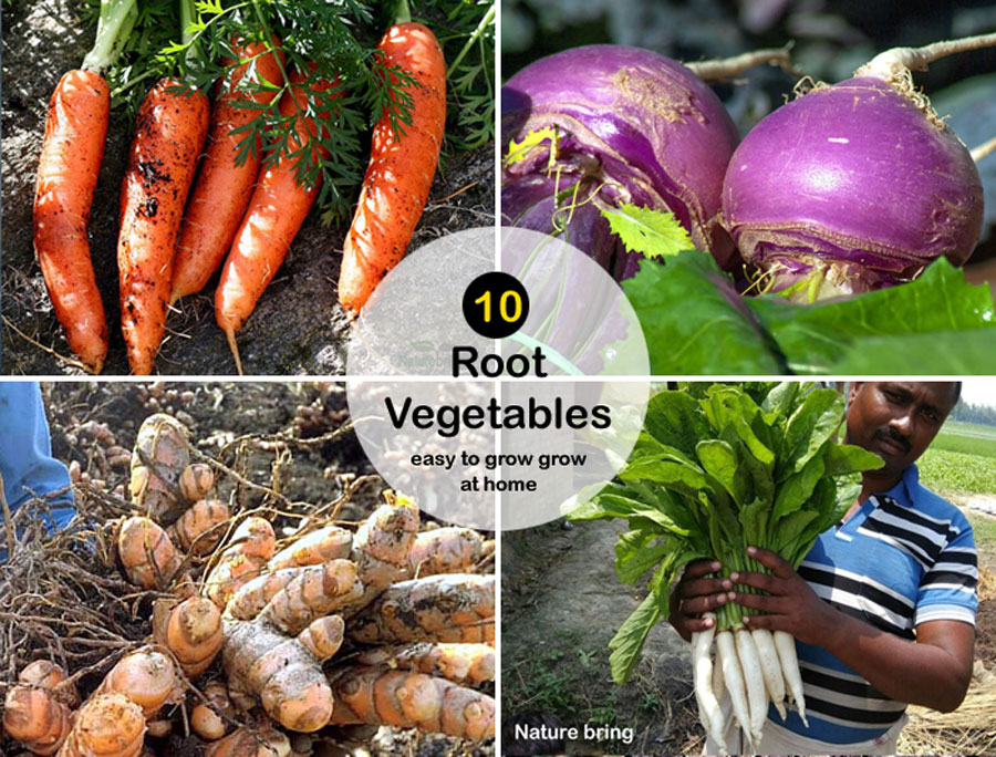 10 Root Vegetables easy to grow grow | How to Grow root vegetables