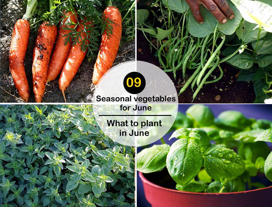 09 Seasonal vegetables for June | what to plant in June | Summer vegetables